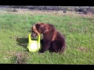 """""""Ручной"""" миша медведь"""
